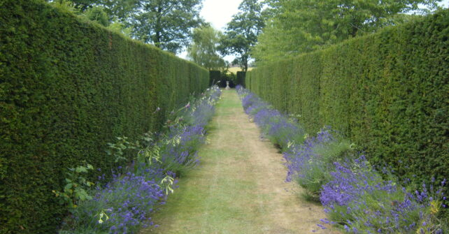 Flower-lined hedge maze with fountain in grounds of Guyers House Hotel
