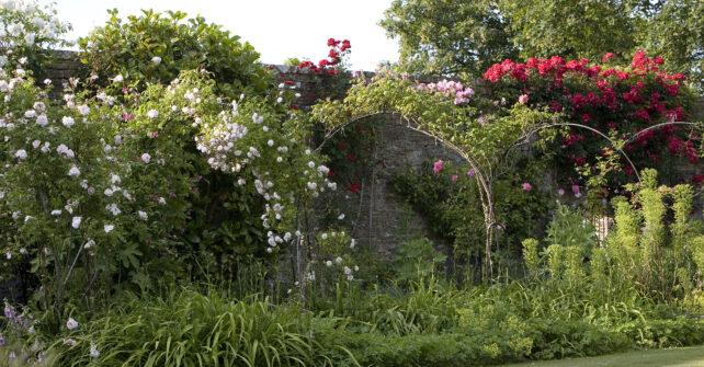 Rose arches along walled garden
