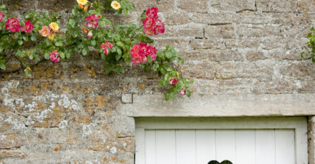 Flowers climbing along walled garden with shrubs and small white wooden gate with heart in the centre