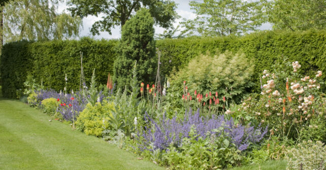 Assortment of flowers and shrubs in hedge-lined garden with neat lawn