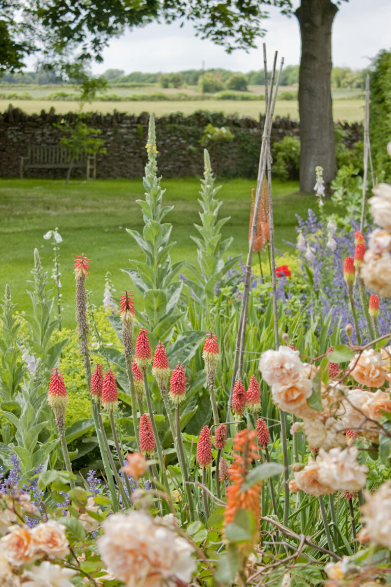 Assortment of flowers in gardens of Guyers House Hotel