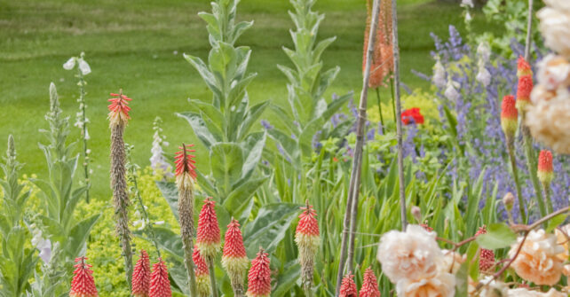 Assortment of flowers in gardens at Guyers House Hotel