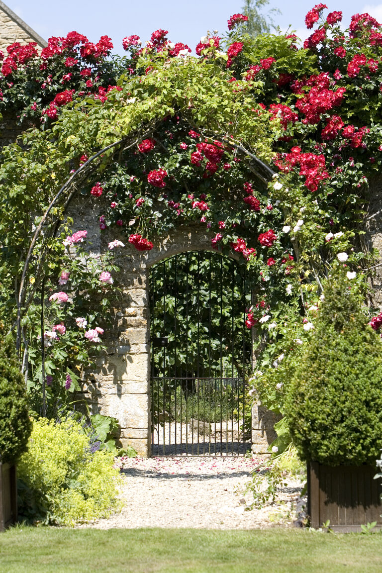 Rose arch above garden gate