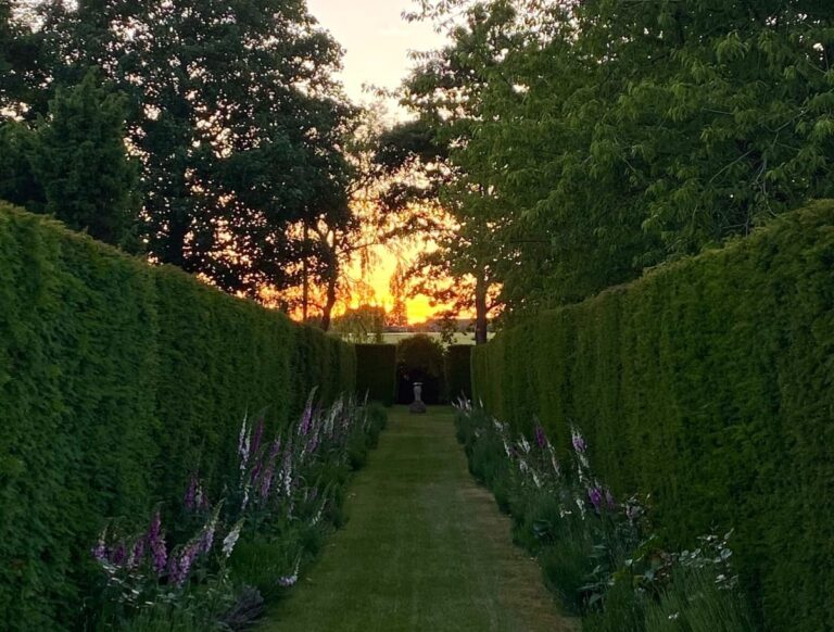 Sunset from the hedge maze in the grounds at Guyers House