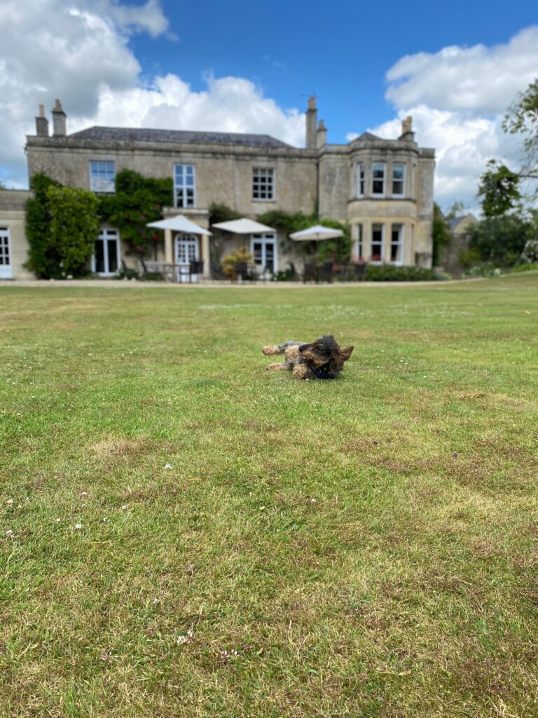 Small dog rolling on the grassy lawn outside Guyers House Hotel
